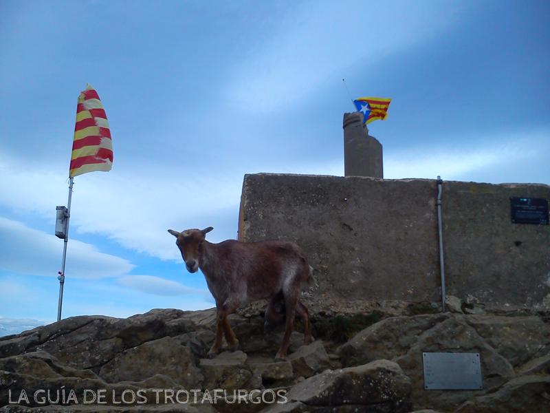 cima del Puigsacalm